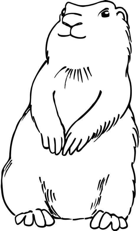 Prairie Dogs Colouring Pages Page 3 Cliparts Co Prairie Coloring Page