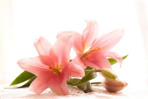 imagenes flores lilis pin johana maldonado y juliet gasca on pinterest