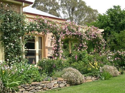 siepi per giardini siepi da giardino piante per giardino scegliere la