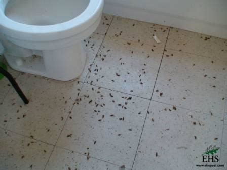 roaches in bathroom only roaches in bathroom 28 images room size picture of row