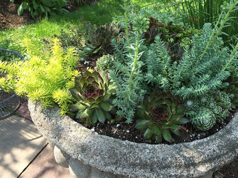 Growing Succulents in Containers: Gardener's Supply