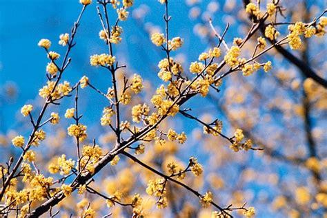 maggio fiori i fiori di maggio quali sono e quali messaggi ci portano
