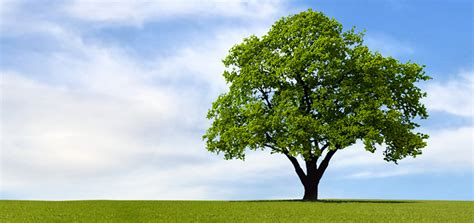 bigw trees the tree victor a leonard