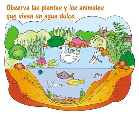 imagenes animales que viven en el agua dibujos de mujer secretaria barrakuda info