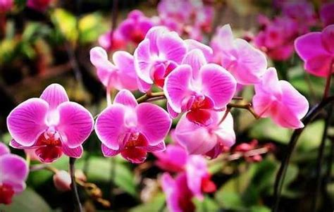 wallpaper bunga anggrek macam macam bunga anggrek related keywords macam macam