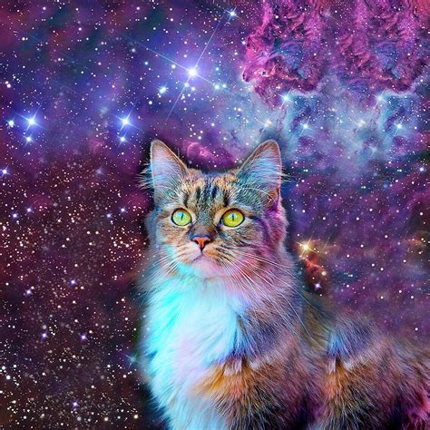 Hipster Duvet Proud Cat With Space Background Digital Art By Johnnie Art