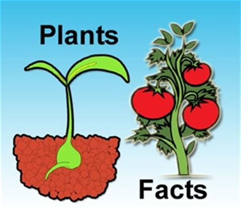 interesting facts about plants gohomeworkhelp com