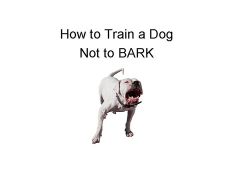 how to the not to bark how to a not to bark