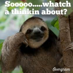 Funny Sloths Memes - pics for gt clean funny sloth memes