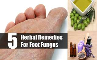 foot fungus home remedy top 5 herbal remedies for foot fungus how to treat foot