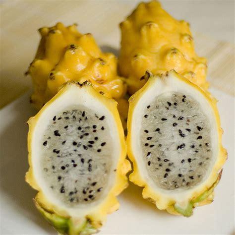 Biji Benih Tanaman Buah Indian Jujube buah naga kuning buahunik