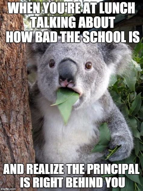 Koala Meme Generator - koala meme generator don t worry you re koalafied koala