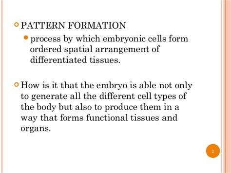 pattern formation limb development of tetrapod limb