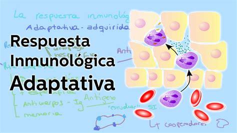 la respuesta la respuesta inmunol 243 gica adaptativa biolog 237 a educatina youtube