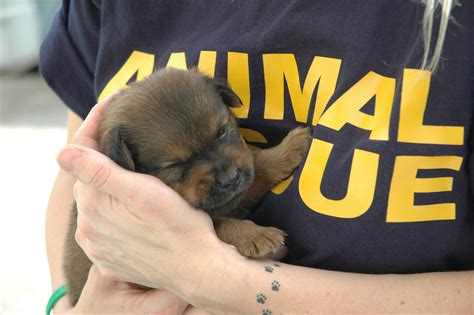 international funding for animal rescue