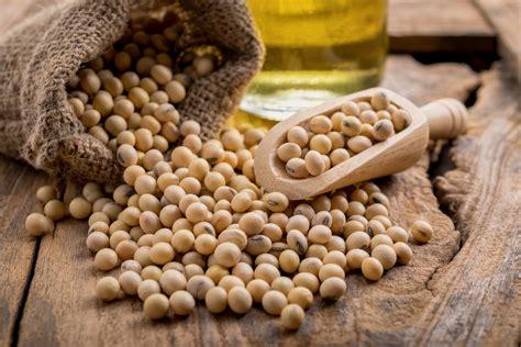 alimenti di soia soia tipologie propriet 224 benefici uso e controindicazioni