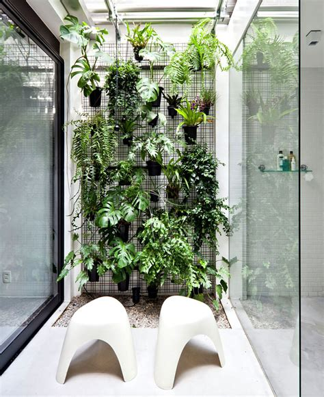 best bathroom plants best bathroom plants to decorate your modern bath with