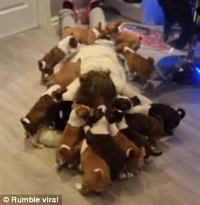 covered in puppies of 2 posts of what it s like to live with 16 puppies ethiogrio