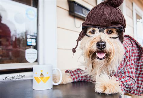 can dogs coffee nothing found for inspiring pet photographer sheryl mann of flying photography