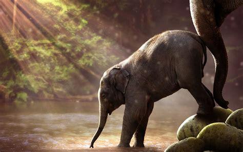 wallpaper elephant cute cute baby elephant wallpaper for desktop download in hd 4k