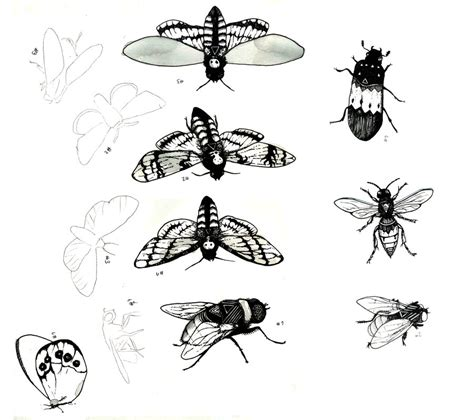 insect tattoo designs insect design