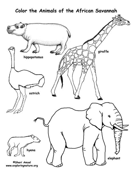 Coloring Sheets African Animals | free coloring pages for children of color non commercial