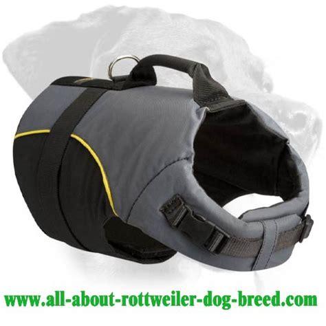 are rottweilers safe order walking rottweiler vest rehabilitation