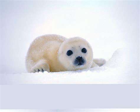 seal best of best wallpapers seal wallpapers