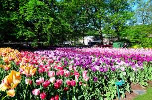 World Largest Flower Garden World S Largest Flower Garden Keukenhof Did You Tha Flickr Photo
