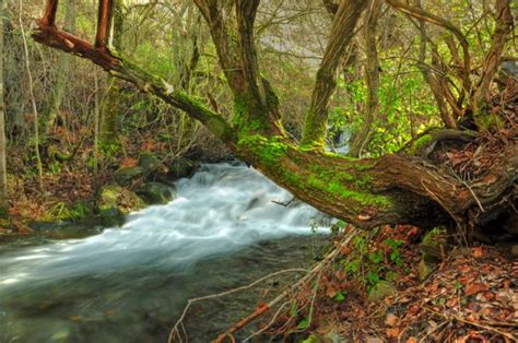 a orillas del rio a la orilla del rio fotos de paisajes naturales y urbanos