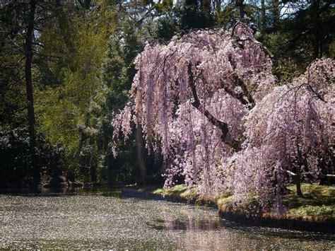 foto giardini fioriti 25 posti nel mondo diventano incredibili giardini