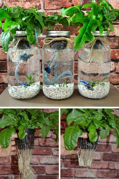 pin  indoor aquaponics