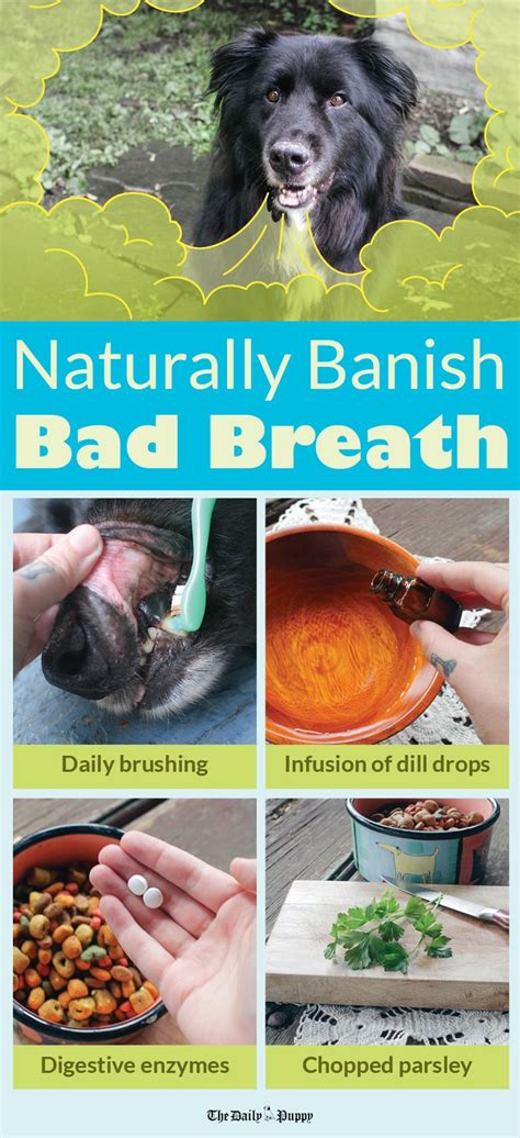 how to freshen dogs breath 25 best ideas about breath on bad breath coconut dogs and