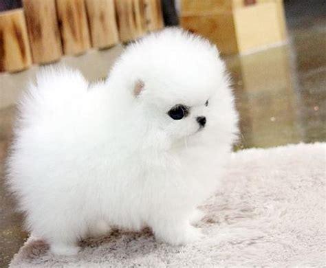 negozi animali pavia annunci cani vendita cuccioli di maltese a pavia da