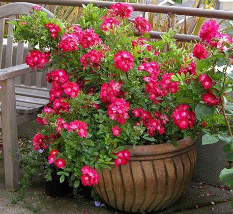 fiori per vasi da balcone vasi da balcone vasi da giardino tipi di vasi da balcone