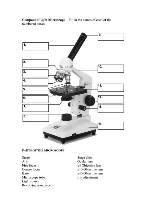 the compound light microscope worksheet compound light microscope worksheet geersc