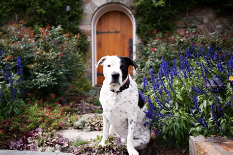 Keeping Dogs Out Of Garden by 5 Pet Friendly Gardening Tips Aidaia Gardening