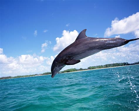 dolphins wallpapers | High Definition Wallpapers|Cool ...