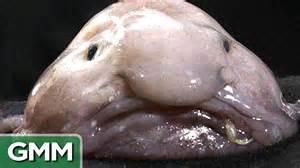 most best top 5 ugliest animals ranked