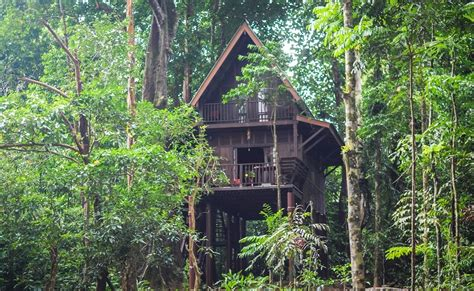 our jungle house our planet travel