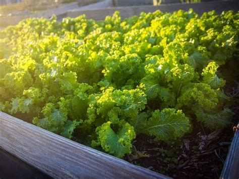 vegetables to plant in february 17 best images about garden on gardens