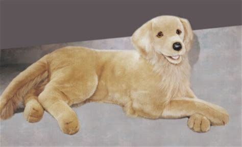 golden retriever with stuffed animal best golden retriever stuffed animal photos 2017 blue maize