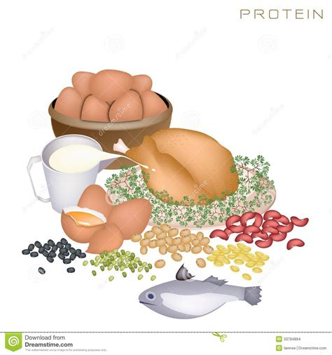 protein nutrients protein food clipart clipart suggest
