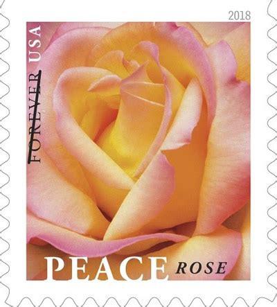 usps to dedicate peace rose stamp   postalnews.com