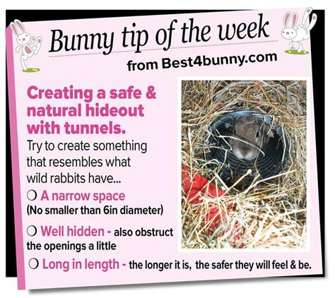 Must For The Week The House Bunny by Best 658 Bunny Basics Images On Other