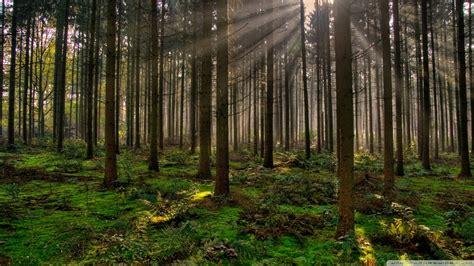 wallpaper hd 1920x1080 forest download forest 30 wallpaper 1920x1080 wallpoper 440922