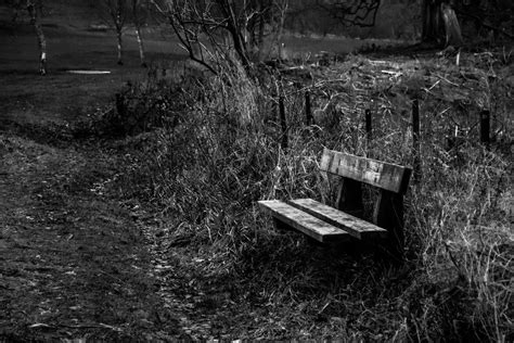 sad bench sad bench by forest picture images photos pictures