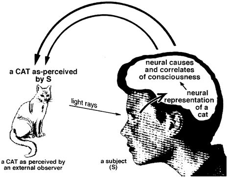 What Is The Nature Of Consciousness