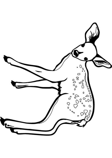 To Print This Handout Please Click On The Image Below Fawn Coloring Pages