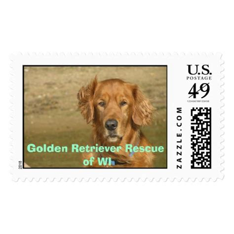 wisconsin adopt a golden retriever happy 2 golden retriever rescue of wi st zazzle